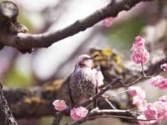 весна, птицы, деревьях