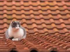страница, бесплатные, кошки