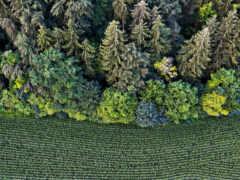 природа, trees, категория