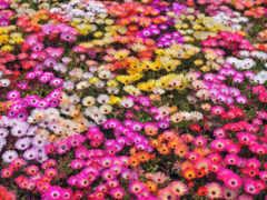 flowers, garden, images