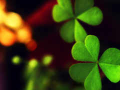clover, лист, клевера
