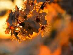 branch, цветение, цветы