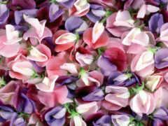 цветы, текстура, color