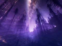 purple, wilderness, id