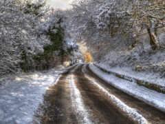 снег, дерево, winter