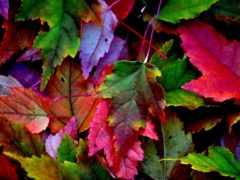 осень, usa, разноцветные