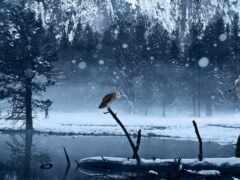волк, снег, ложбинка