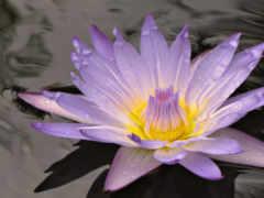 цветы, цветок Фон № 2150 разрешение 1920x1080