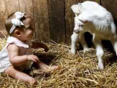 козел, козы, год