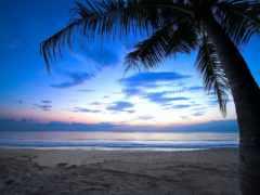 caribbean, пляж, fondos