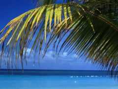 palm, ocean, море