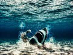 акула, качок, mutant