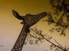 жираф, videonabludenie, техника