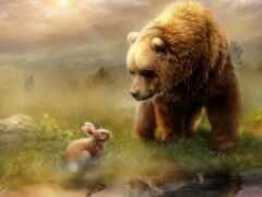 медведь, заяц