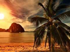 palm, sun, oir