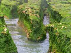 река, поток, mossy