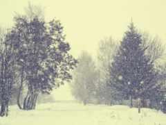 дерево, winter, снег