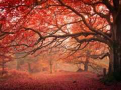 сервис, rhom, дерево