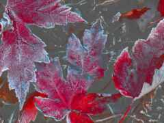 лист, colorful, makryi
