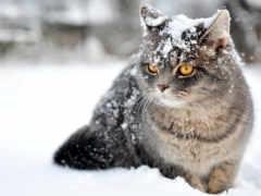 кошки, кот, снег