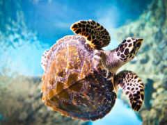 черепах, черепахи, водные
