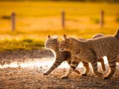 march, кот, коты