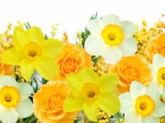 цветы, flowers, весна