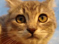 кот, obrázky, kedi