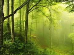 лес, коллекция, зелёный