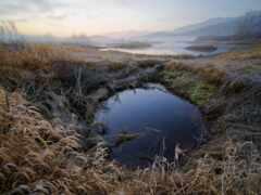 marsh, freshwater