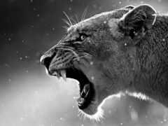 фотообои, lion, animal