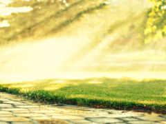 трава, газон, капли