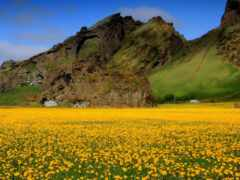 цветы, поле, гора