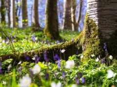 cvety, лесу, дерево