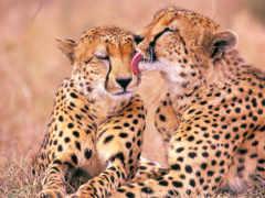 sul, áfrica, animais