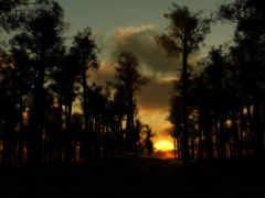 лесу, звуки, вечер