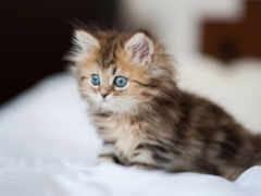 котенок, dream, пушистый