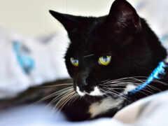 кот, black, утро