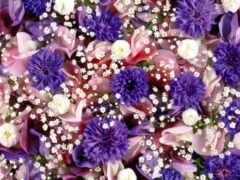 цветы, dual, oir
