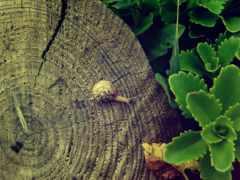 пень, зеленый, лист