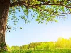 дерево, под, summer