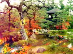 jardin, japonais, paysage