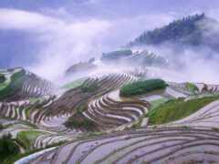 рис, терасса, туман