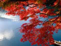 japanese, klnyi, лист