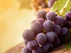 виноград, garden, siberian