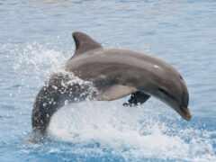 дельфин, geoffrey, baker