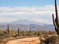 кактус, пустыня, гора