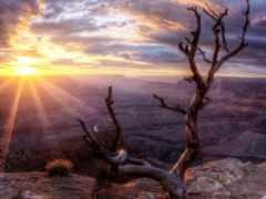 небо, каньон, дерево