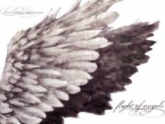 крылья, схема, ангела