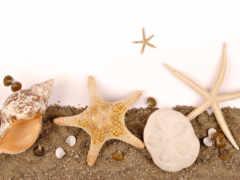 star, морская, ракушек